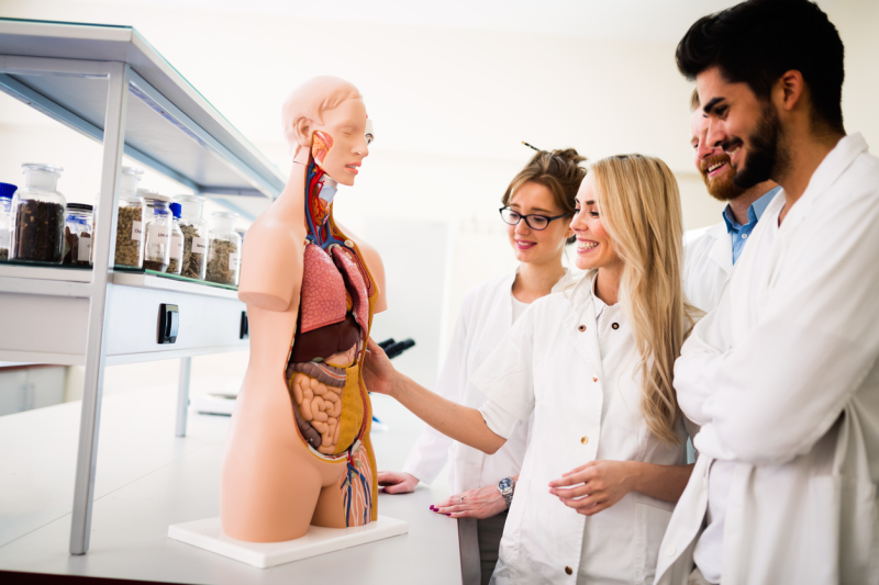 An Introduction to Human Anatomy & Physiology course | reed.co.uk